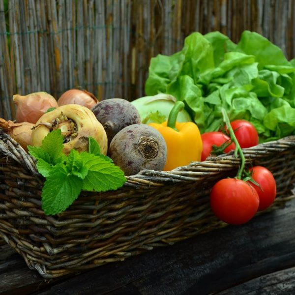 vegetables-vegetable-basket-harvest-garden
